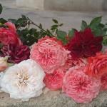 گل ساناز