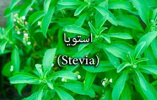 stevia-%d8%a7%d8%b3%d8%aa%d9%88%db%8c%d8%a7